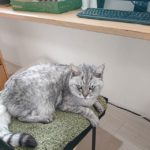 今日も、イスの乗っ取りが起こっております…かわりに仕事してくれるのかなぁ… #catstagram #cat #猫 #にゃんすたぐらむ