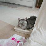 たくさんのメッセージどうもありがとうございました。ひとつひとつちゃんと読ませていただきました。こんなにもメッセージいただいて、嬉しかったです。今日は、初七日。今、書きたいと思ったことをブログに書きました。#飼い猫志願
