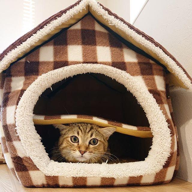 しまさんが使っていたネコハウス。タビ…使い方ちょっと違う…けっこう探したよ…#ねこ#cat#catstagram#minuet#ミヌエット