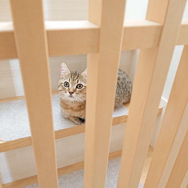 冷蔵庫が音がうるさくなって、冷凍庫の物も柔らかい時が多々あるので、完全に壊れる前に買い換え。二階リビングに冷凍庫を入れてもらうときに、タビちゃんは、三階で待機。でも、どうしても気になるので脱走防止策ギリギリまで来て、チェック。真上からもチェック!気になってしょうがないタビちゃんでした(^_^) #猫#cat#こねこ#ねこ