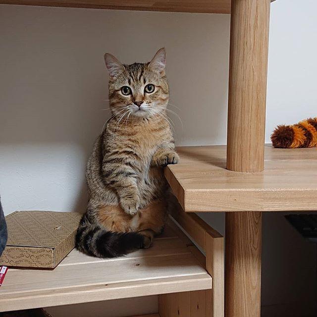 立ってます♪...#cat#catstagram #minutes#ねこ#こねこ