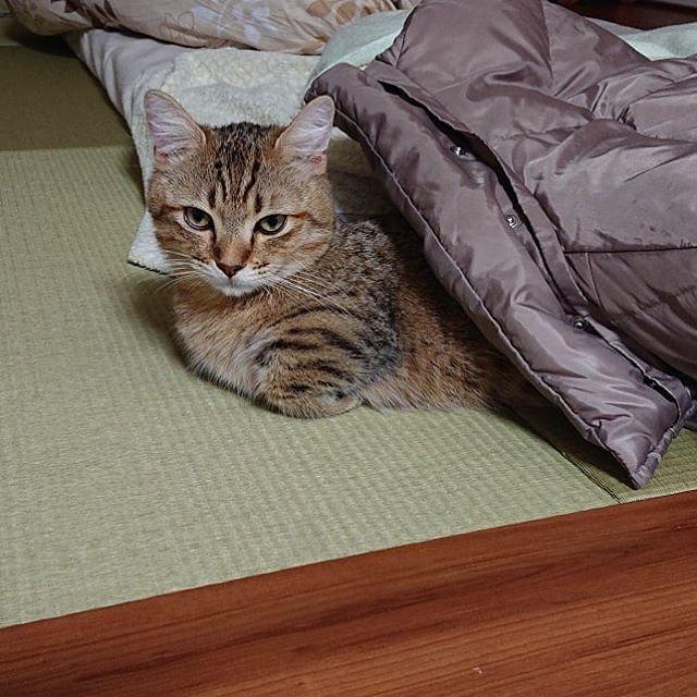 ダウンコートへ出たり入ったり♪ あったかくて気持ちいいらしい(^_^)..#cat