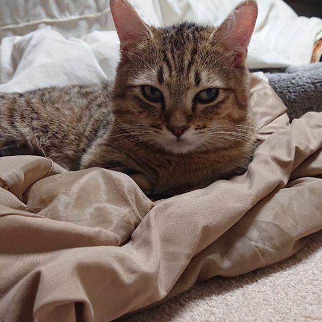 今年もどうもありがとうございました。来年もどうぞよろしくお願いいたします!...#cat