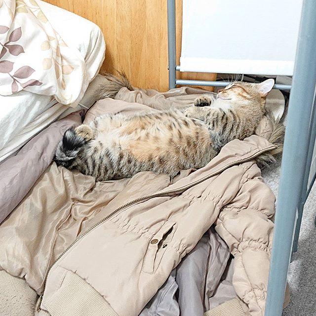怒りすぎて疲れて寝ました(笑) ..#cat#catstagram #子猫#ねこ#ミヌエット