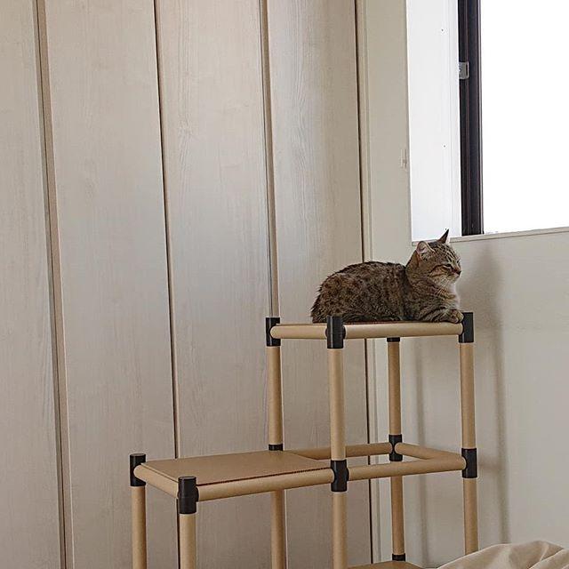 猫用展望台をつくる前は、こんな感じでちょっとせつなかったのです(笑)...#minutes #cat #猫 #子猫 #ミヌエット #キジトラ #ミヌエット男の子 #ねこすた #catstagram #猫と住む家